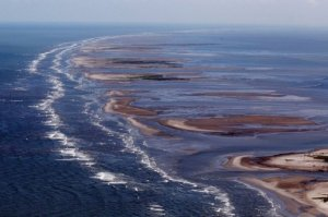 The Louisiana Coast after the oil spill(photo credit: www.phys.org)